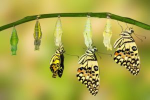 Leading a change - do you change first or last?
